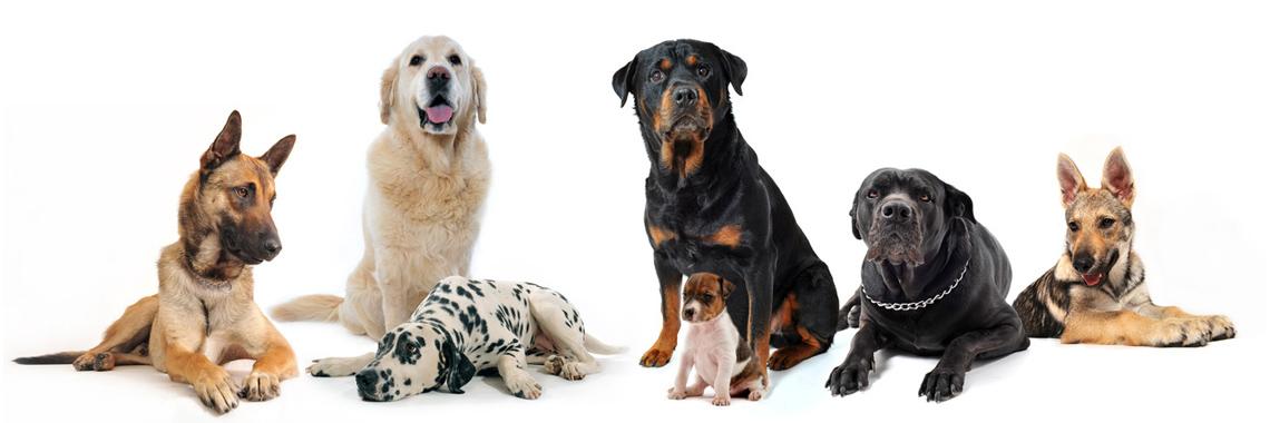 pethouse vitamini za pse