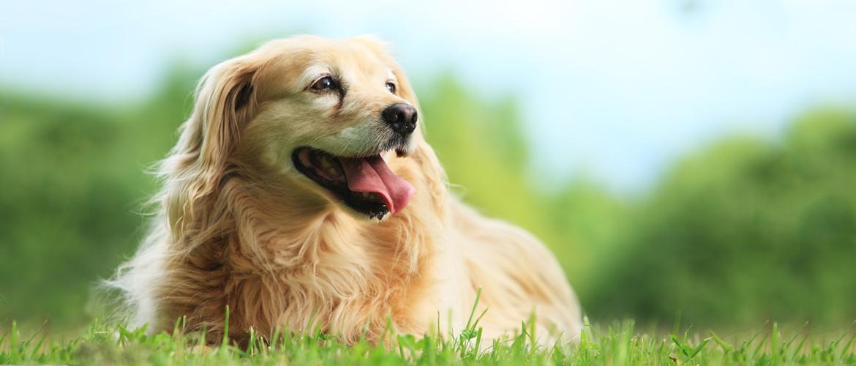 slide1 pethouse vitamini za pse