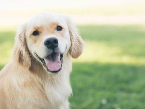 Kako da vaš pas ima lepu i sjajnu dlaku