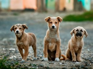 5 razloga zašto je bolje udomiti nego kupiti psa