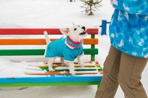 PetHouse - Stize zima - pripremite svog ljubimca