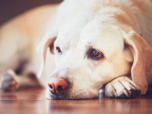 Ovo su pokazatelji da vašeg psa nešto muči – prepoznajte na vreme!