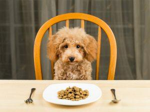 Kako da svom krznenom prijatelju omogućite najbolju ishranu
