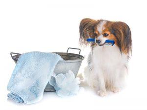Sve što treba da znate o higijeni svog ljubimca